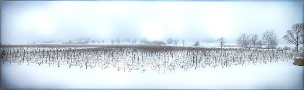Winter Vineyard by Jonathan Westfall