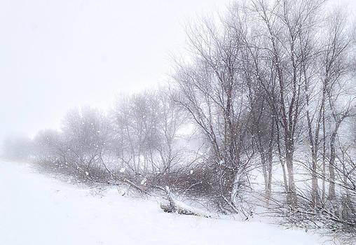 Winter Walk by Bob Mintie