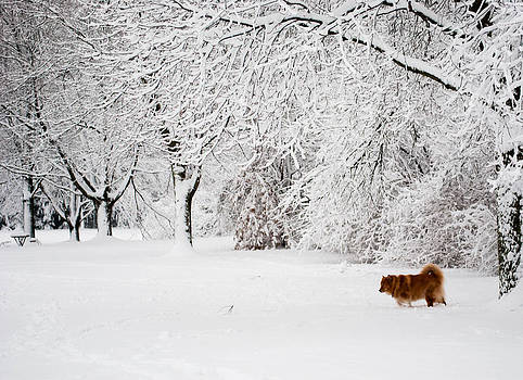 Winter walk by Daphne Duddleston