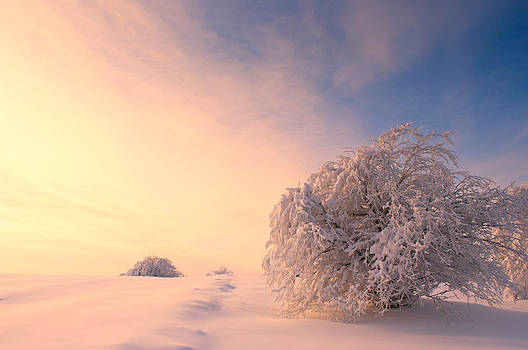 Winter Warmth by Catalin Petre Stan