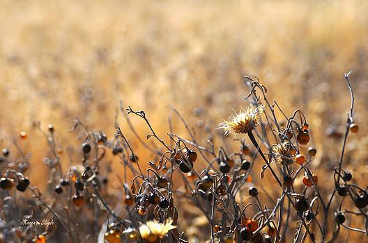 Karen Slagle - Winter Weeds