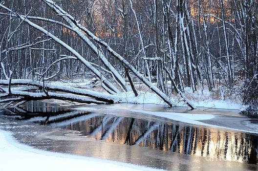 Terri Gostola - Winter Reflection