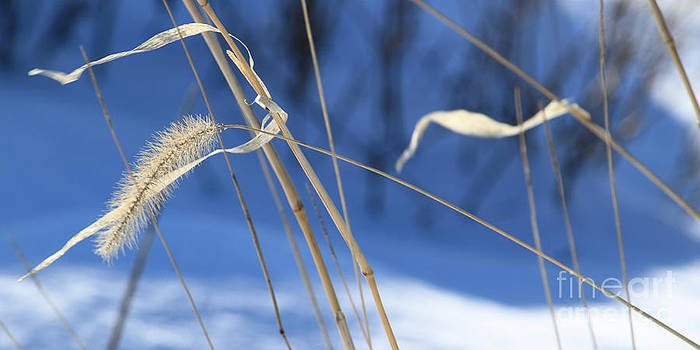 Winter Wheat by Denise Lilly