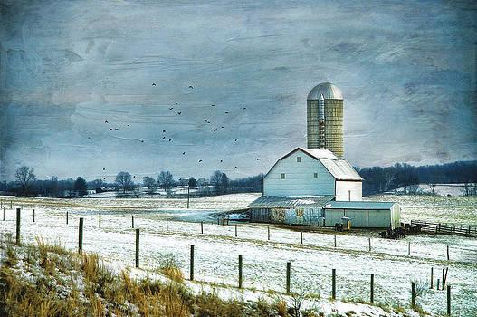 Winter White by Kathy Jennings