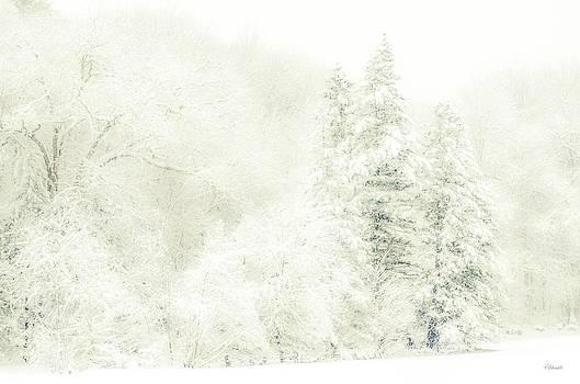 Winter White by Pat Edsall