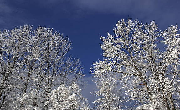 Winter White by Sylvia Hart