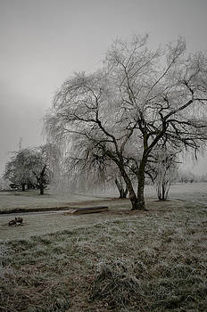 Winter Willow by Jesse Wright