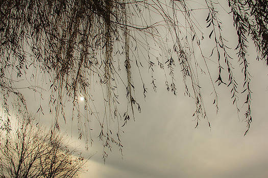 Winter Willows by Graham Hayward