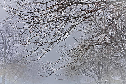 Winter With  A Promise Of Spring by Barbara Dean