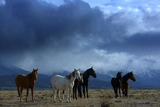 Winter With Wild Horses  by Jeanne  Bencich-Nations