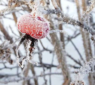 Winter Wonder by Alex Kossov