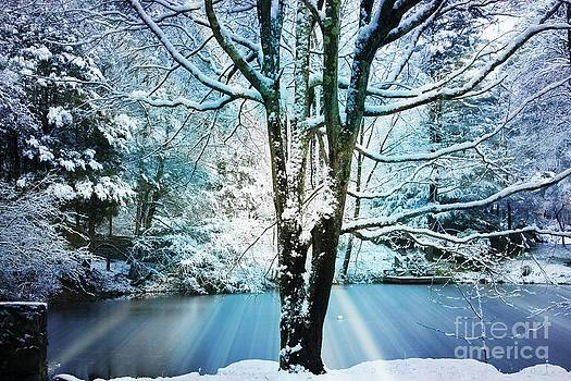 Winter Wonderland by Judy Palkimas