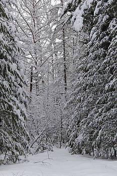 Winter Wonderland by Sue  Thomson