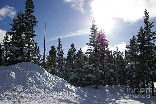 Tannis  Baldwin - Winter Wonderland