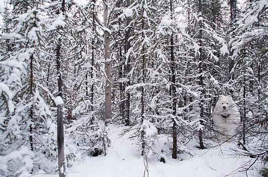 Winter Wonderland by Valerie Pond