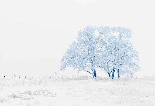 Winter Wonderland by Vel Verrept