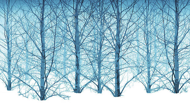 Winter woodland in blue by Gillian Dernie