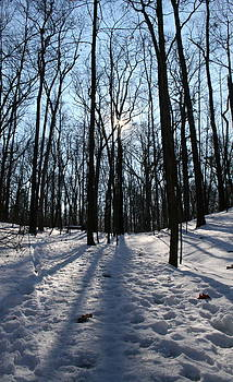 Winter Woods 2 by Melany Raubolt