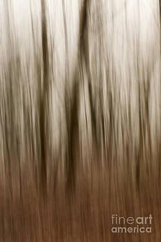 Anne Gilbert - Winter Woods Abstract
