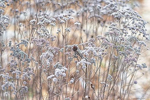 Winter by Yvonne Emerson AKA RavenSoul