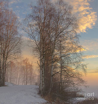 Winterday by Sylvia  Niklasson