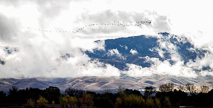 Wintering Hills by Brian Williamson