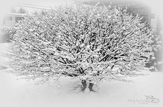 Guy Hoffman - WinterPark02
