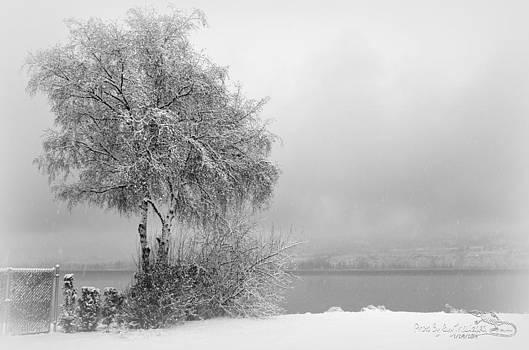Guy Hoffman - WinterPark04