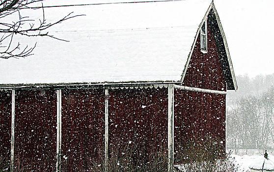 Winter's Beauty by Andrea Dale