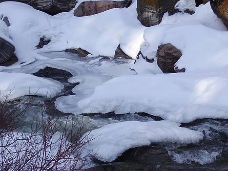 Winters Beauty by Yvette Pichette