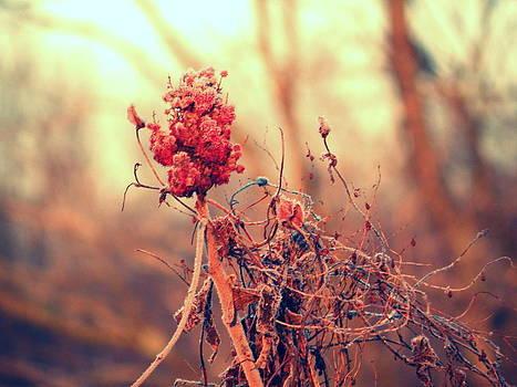Winter's Beginning by Josie Dupuis