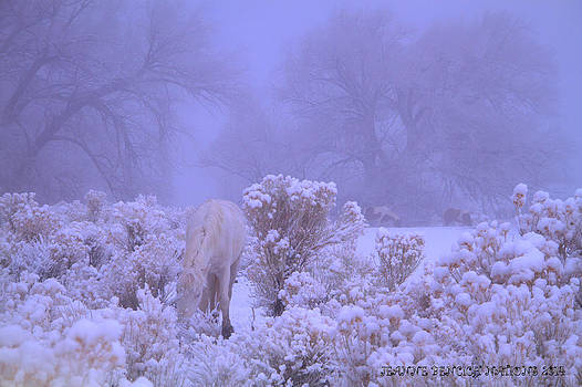 Winter's Blanket OF Snow  by Jeanne  Bencich-Nations
