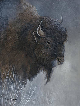 WINTER'S BREATHWoods Bison by Patricia Mansell