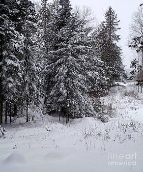 Winter's coming by Steven Valkenberg