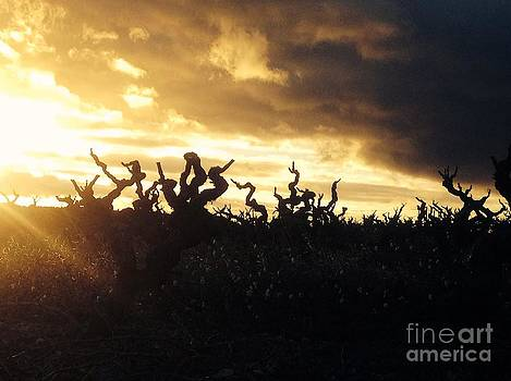 Winters Eve in the Vineyard by France  Art