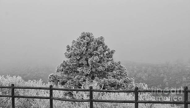 Winters' Frost 2 by Bruce Hamel