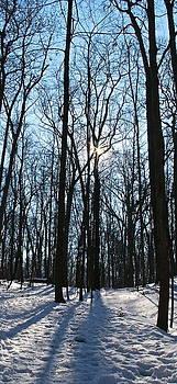 Winter's Illumination by Melany Raubolt