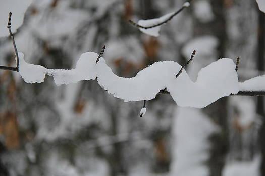Winter's RIde by Sue  Thomson
