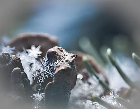 Winter's Secret  by Tamara Hamula