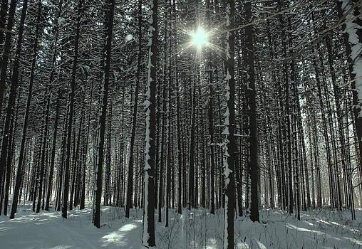 Rosanne Jordan - Winters Sun in the Spruces