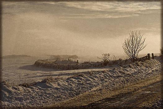 Liz  Alderdice - Winter