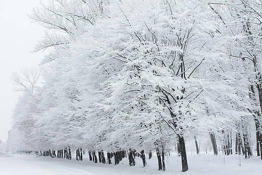 Wintertime by Pavlo Kuzyk