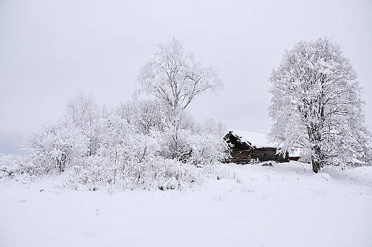 Wintry landscape by Conny Sjostrom