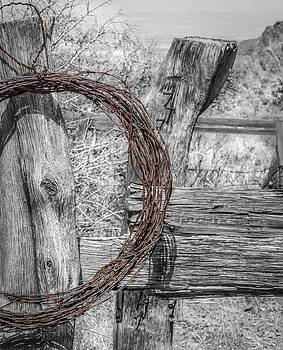 Wire and Wood by Julie Basile