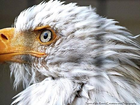 Wisdom of the Eagle by Dawna Raven Sky