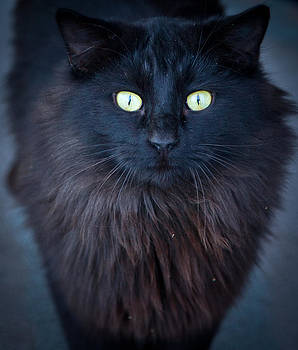 Wise Black Cat by Michael Molumby