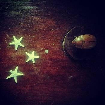 Wish by Marigan O'Malley-Posada