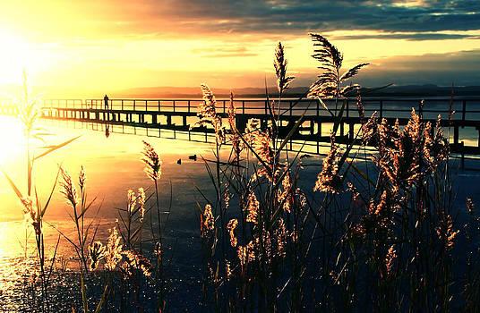 Wish you were here. by Beata  Czyzowska Young