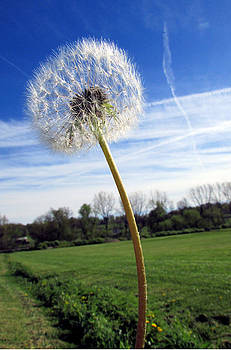 Wishes or Weeds by Andrea Dale