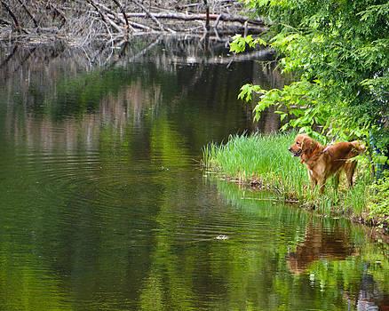 Wishin' he was Fishin' by Cathy Hacker